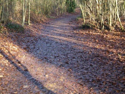 In several places the path may be covered by leaves and not distinguished easily from the surrounding ground.
