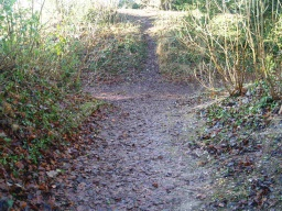 There may be short paths from the main route that will provide views into the ancient earth work that is Wandlebury Ring. This one has a gradient of about 14% (1:7) as it approaches the path around the bottom of the earth works.
