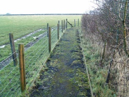 The path is narrower in places because there are rabbit scrapes and holes along its edge.