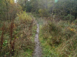 The path is narrower with encroaching vegetation.