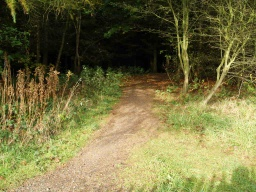 There is  a lot less light under the conifer trees and the path may be less distinct.