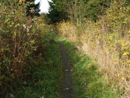 The path is less than 300mm wide and there is encroaching vegetation